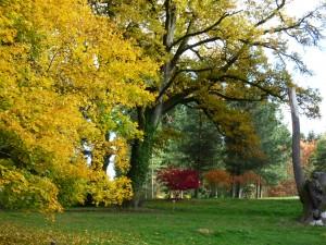 Arboretum château Neuvic D'Ussel Limousin corrèze