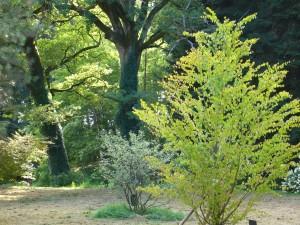 Arboretum du château de Neuvic d'Ussel Lemouzi 2
