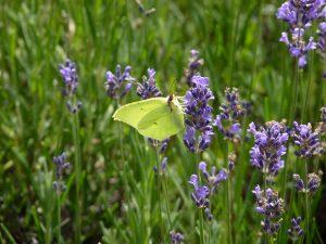 Parcours insectes Papillon
