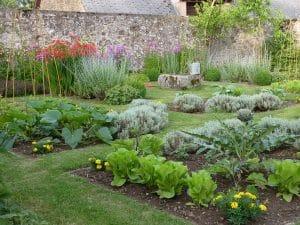 Les carrés de légumes et les fleurs